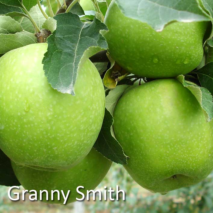 Sortiment Greni Smit Granny Smith