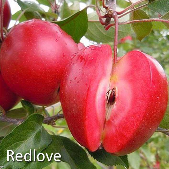 Sortiment Redlove
