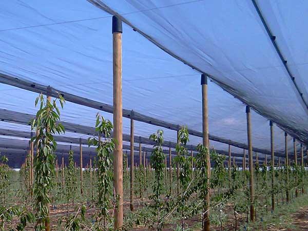 barzoy protivgradni sistemi sa drvenim stubovima 2