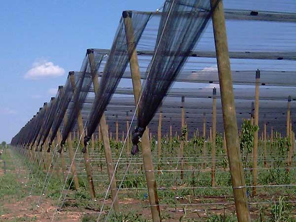 barzoy protivgradni sistemi sa drvenim stubovima 1