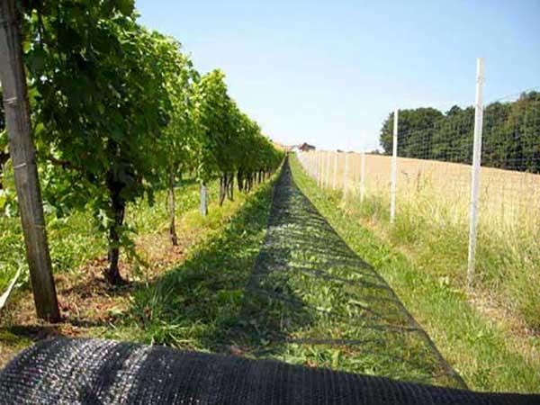 protivgradni sistemi za zastitu vinograda