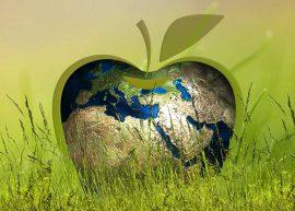 Мировая продукция яблок в 2018