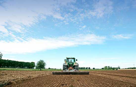 Питомники barzoy подготовка почвы 2