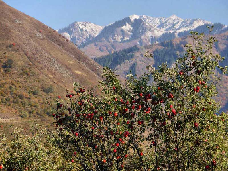 Pra-jabuka. Poslednji šumarci na svetu