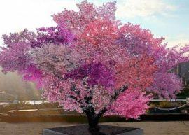 На одном дереве 40 видов фруктов