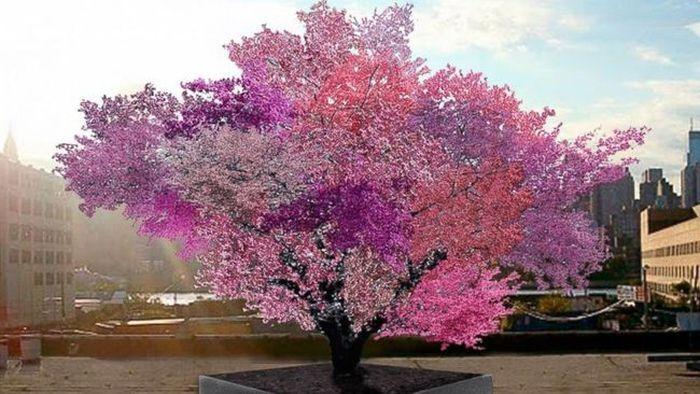40 vrsta na jednom drvetu
